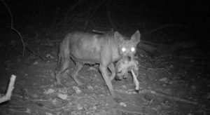 http://www.science-rumors.com/top-10-chupacabra-sightings-with-pictures-proved-it-is-real/