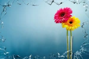 yellow-and-pink-flowers-view-behind-broken-glass