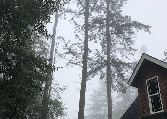 Fog, trees, partial house