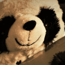 Panda bear smiling wickedly with a knife